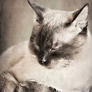 Feline Recline by KBritt