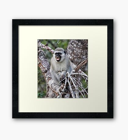 Mr Phographer, You are NOT Getting My Good Side Framed Print
