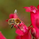 The bumblebee by jean-jean