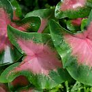Colourful leaves by Robyn Selem