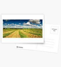 Fresh cut hay Postcards