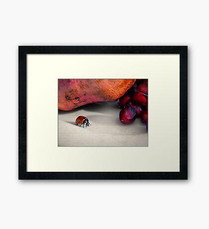 Forbidden fruit... Framed Print