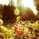 Autumn Flowers by Jon Bradbury