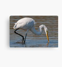 Lunch time at Messick point. Canvas Print