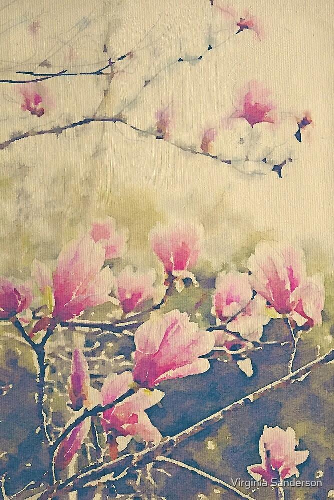 Magnolia Tulip Tree in Spring by Virginia Sanderson