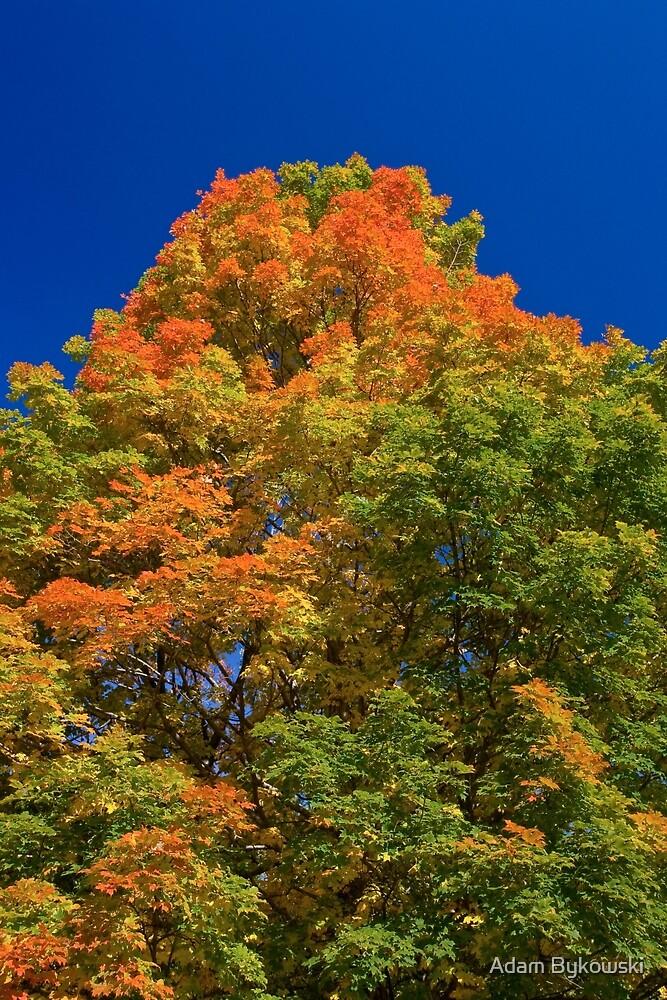 Maple Mountain by Adam Bykowski