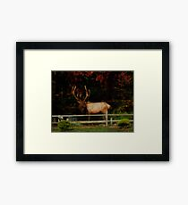 Bull Elk, PA Framed Print