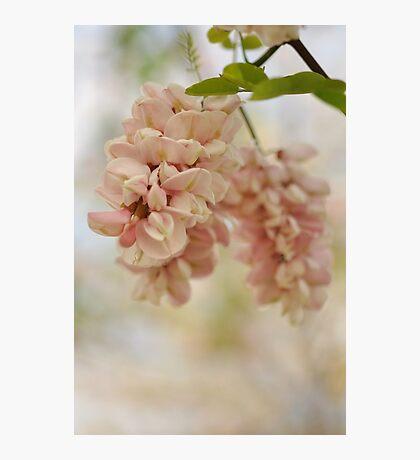 Spring Quiet Photographic Print
