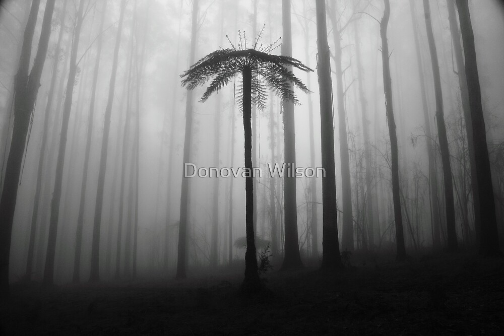 Black and white forest. by Donovan Wilson