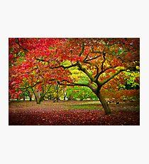 Acer Glade, Westonbirt Arboretum, England Photographic Print