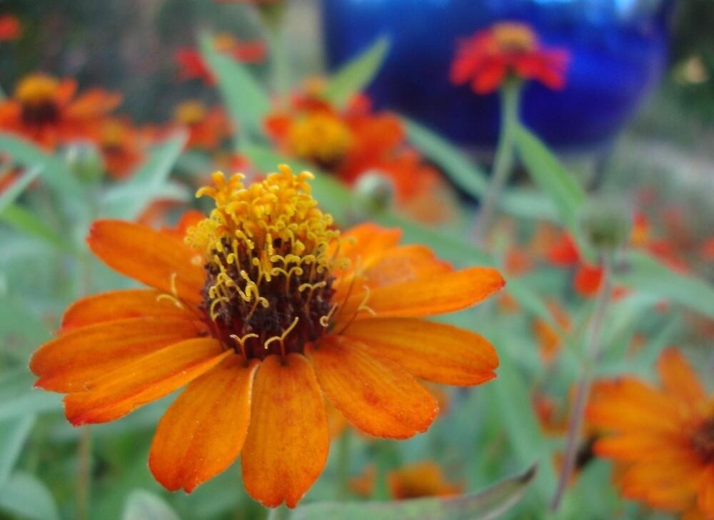 Garden Delight by Annie Adkins