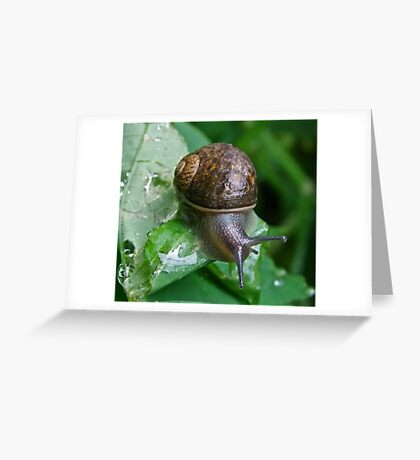 Out and About to Munch Greeting Card