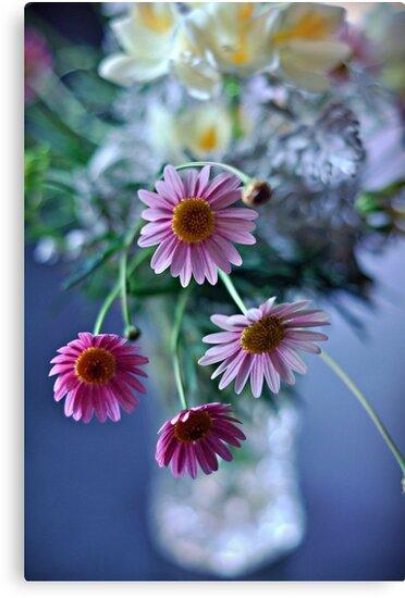 daisy spray by Karen E Camilleri
