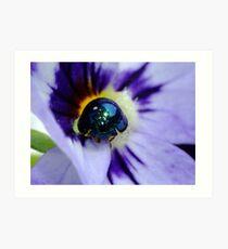 Steelblue Ladybird - Halmus chalybeus  Art Print