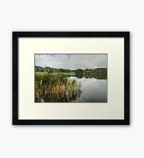 Esthwaite Water...Reeds Framed Print