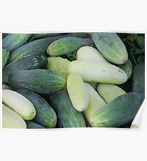 Miscellaneous cucumbers. Poster