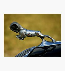 Automotive Bestiary ~ Part One Photographic Print