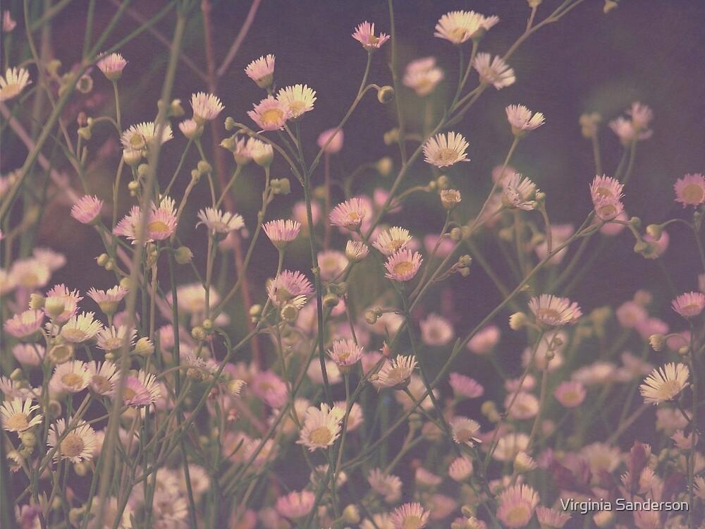 Vintage Asters Daisies Fleabane Wildflowers by Virginia Sanderson