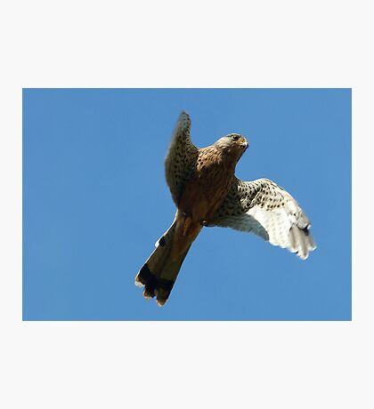 Hovering Flight Photographic Print