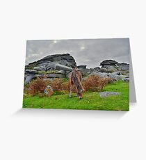 Dartmoor: Pony at Pew Tor Greeting Card