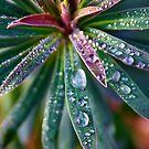 Rainbow Water Drops by Erika  Hastings