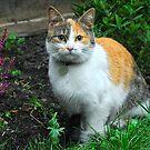 Guest Cat by John Hooton