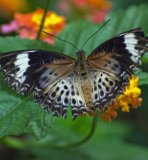 Glittering wings for jeanlphotos by cherylc1
