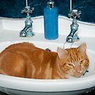 Jasper - Bathtime by John Hooton