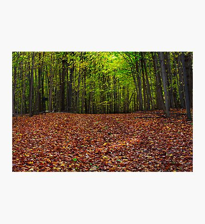 maple forest in autumn Photographic Print