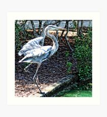 Ready For Take-off Art Print