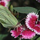 A butterfly by jean-jean