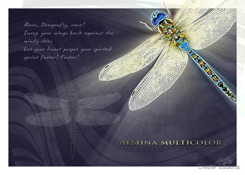 Dragonfly N.3 by Chester  Edwards