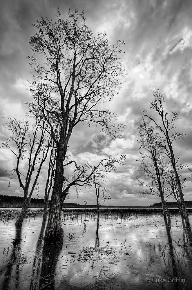 Reflections at Paper Bark Lake by Luke Griffin