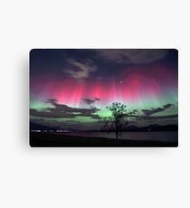 Red Auroras & the tree Canvas Print