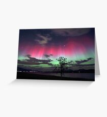 Red Auroras & the tree Greeting Card