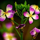 Flowers by Andre Faubert