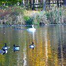 Loantaka Pond, Morristown, NJ by Monica Engeler