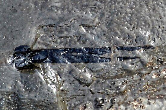 Part of  a  Ichthyosaur Jaw by lynn carter