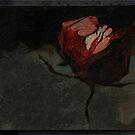 Nighttime rose by Katarzyna Wolodkiewicz
