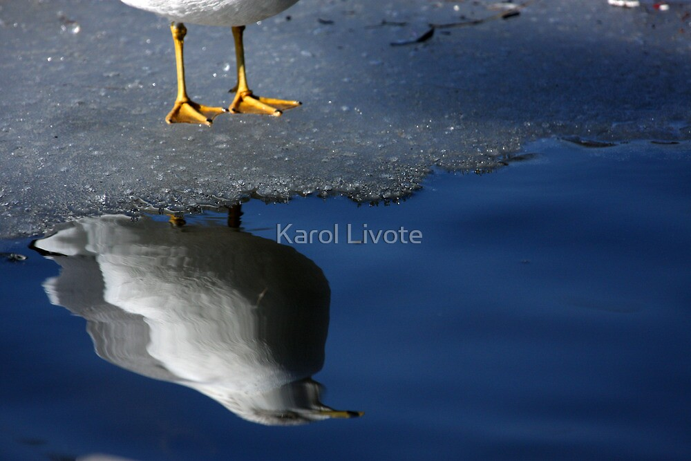A Gull Reflects by Karol Livote