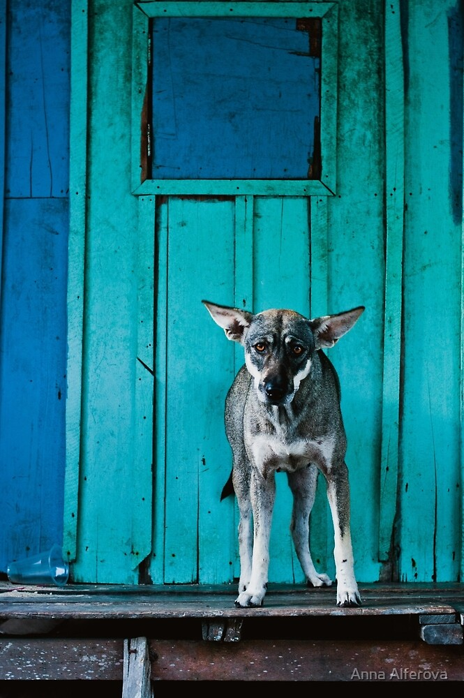 Dog in the fishermen's village by Anna Alferova