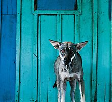 Dog in the fishermen's village by Anna Alferova