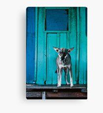 Dog in the fishermen's village Canvas Print