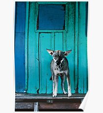 Dog in the fishermen's village Poster