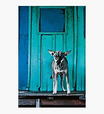 Dog in the fishermen's village Photographic Print