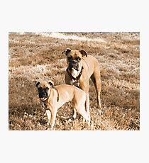 Beautiful Boxers Photographic Print