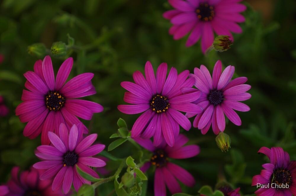 Pretty in Purple by Paul Chubb