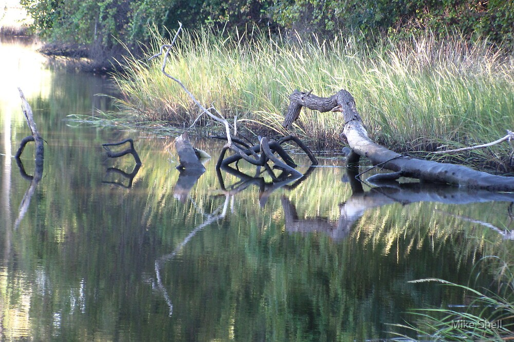 Glyphs of wood and water by Mike Shell
