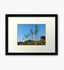 #936 Framed Print