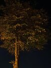 Lone tree waiting for the bus by Themis